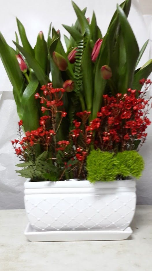 פרחים ברמת גן