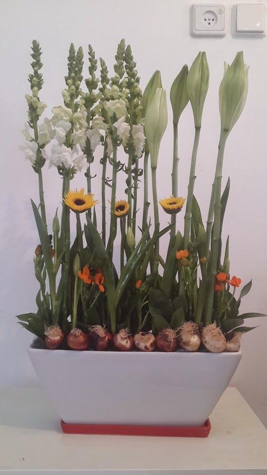 פרחים בגבעתיים