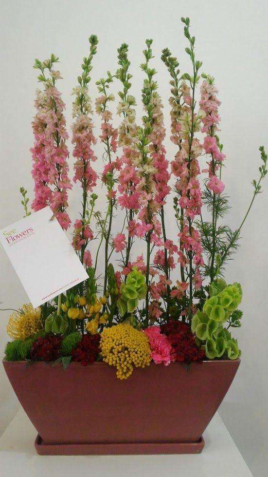 פרחים פרדסיה