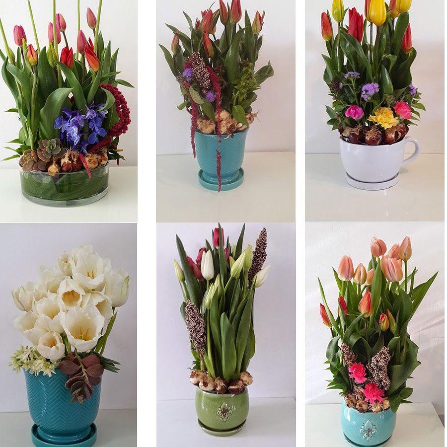 פרחים כפר מונש