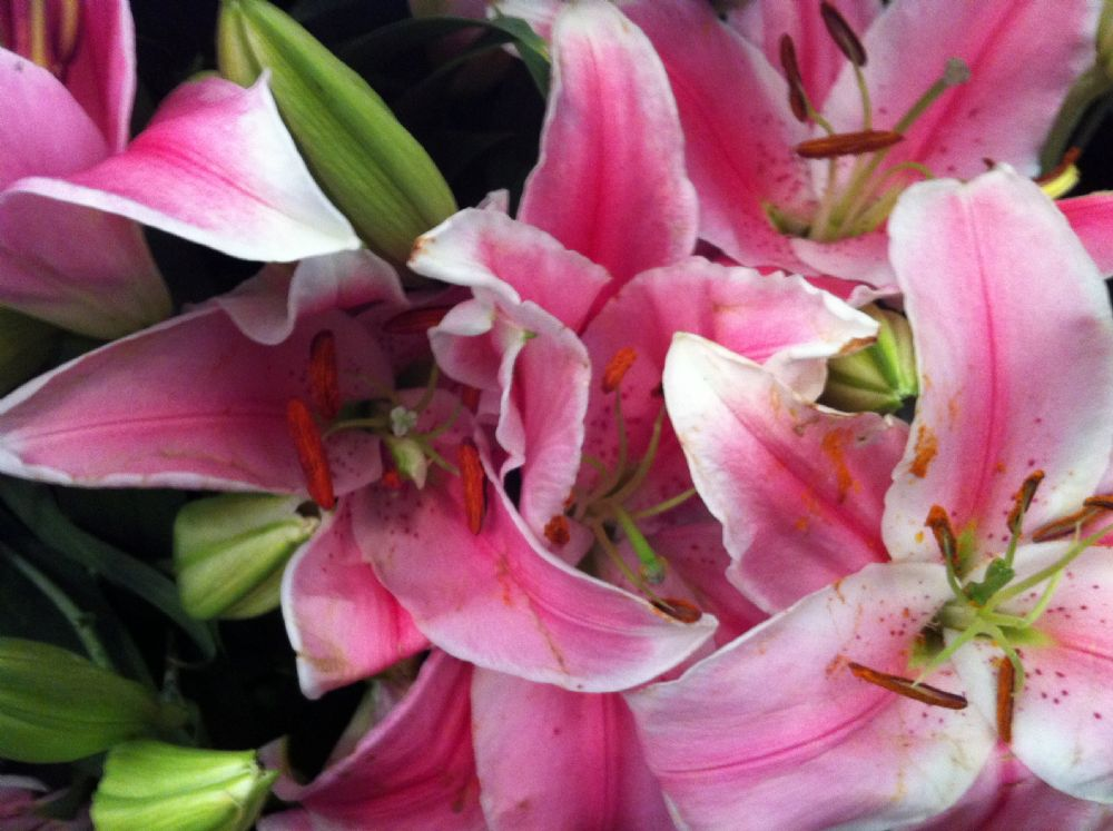 פרחים לכל עת אשר יתנו את ההרגשה המושלמת בלב