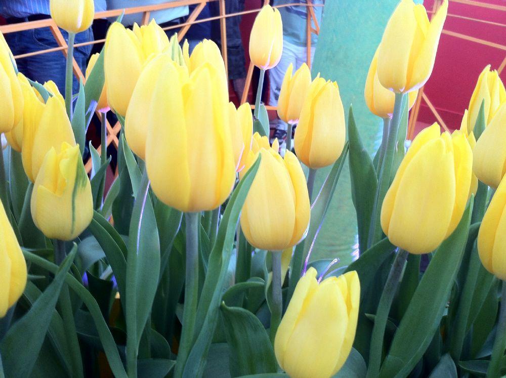 משלוחי פרחים לאם הטרייה